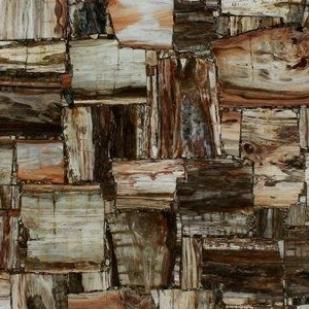 Petrified Wood Jurassic